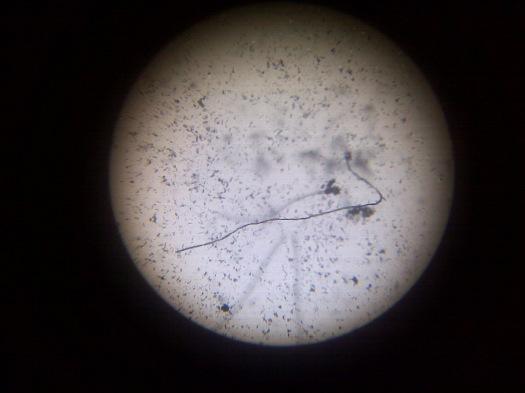 micropolvo_microgeografias04
